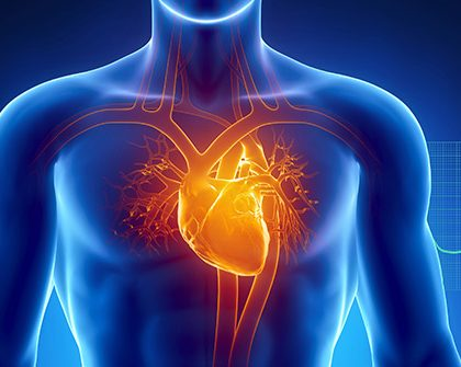 493ss_thinkstock_rf_heart_anatomy_illustration